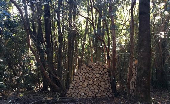 bosque_lena